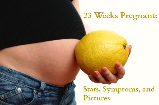 23 uger gravid