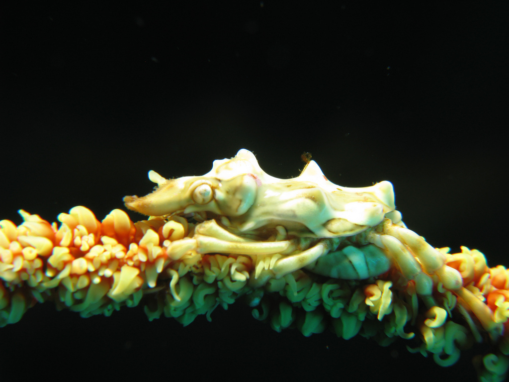 real monstrosities xeno crab