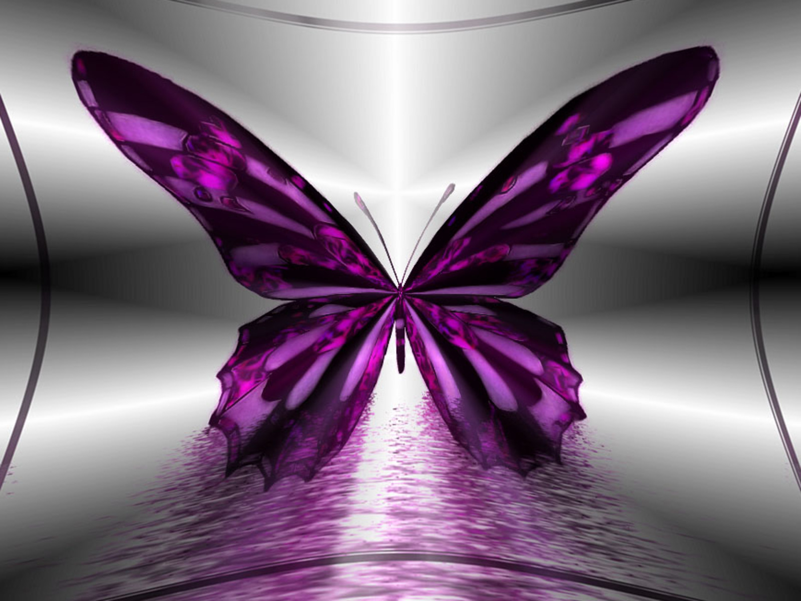 amazing purple butterfly hd pc wallpaper