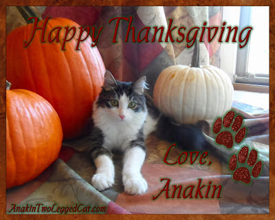 Happy Thanksgiving Love, Anakin The Two Legged Cat