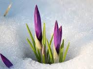 Снова Весна!