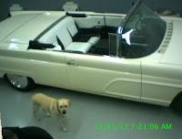 LincVolt mit Hund