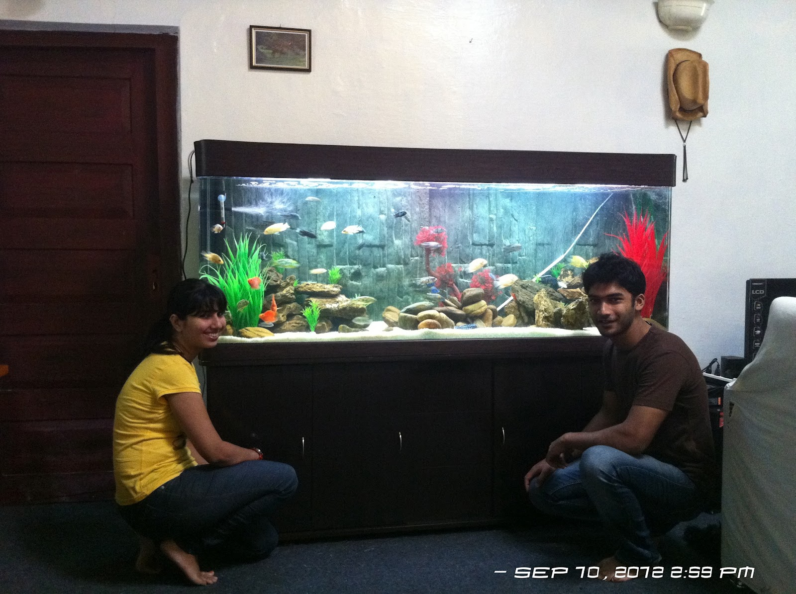 Fish aquarium price in bangalore - 6 Feet African Cichlid Aquarium Setup