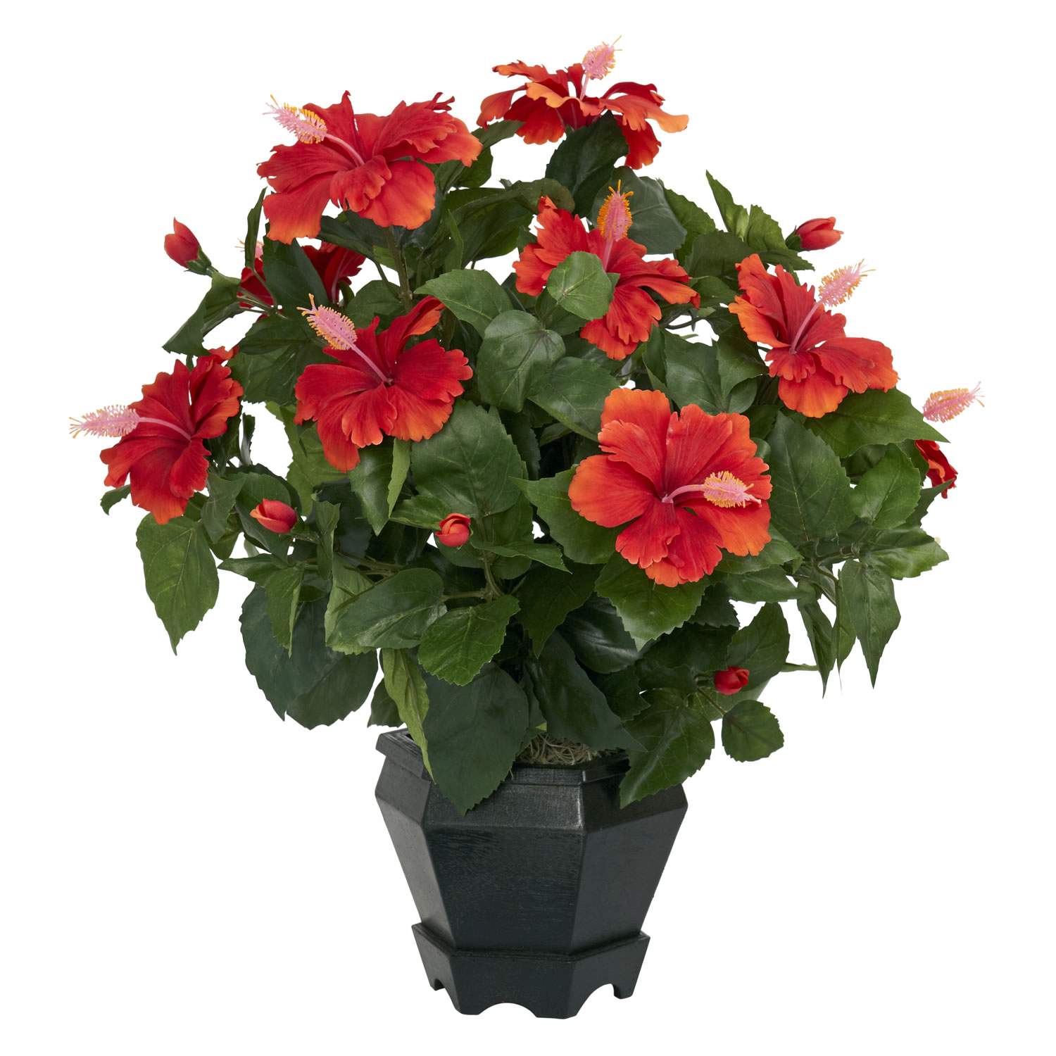 Cocoplex 7 amazingly pretty indoor flowering plants growing tips - Indoor flowering plants ...