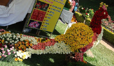 Rose show at Ooty 2011