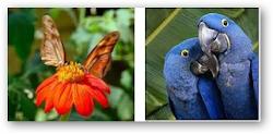 ANIMALES DE LA AMAZONÍA.FOTOS.