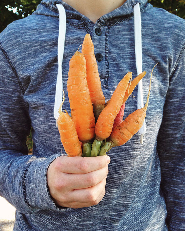 Carrots fresh from the Mill City farmers market in Minneapolis, MN