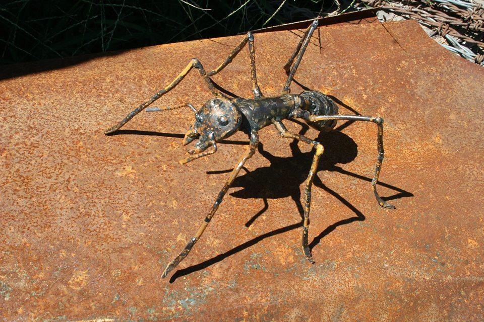 insecto, estudio