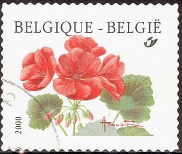 2000 Pelargonium, Ooievaarsbek, Belgique