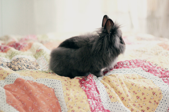 black furry bunny on the bed