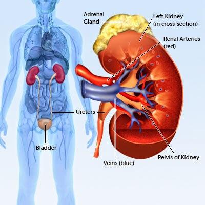 Kidney Pain World Wide Company
