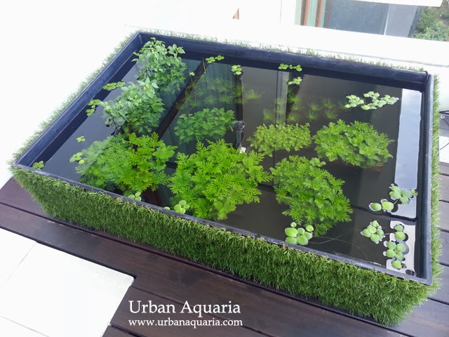 108 litre puddle garden outdoor balcony pond for How to build an outdoor aquarium