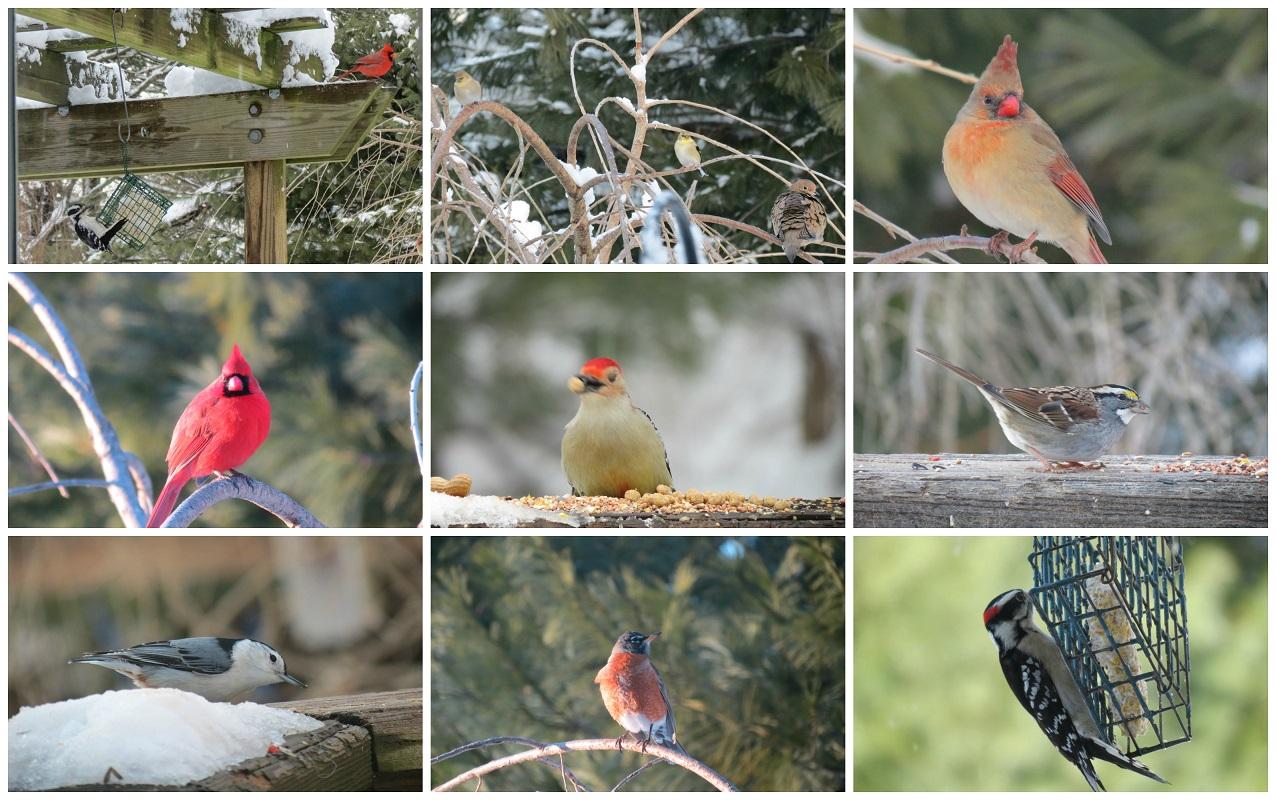 birding is fun the great backyard bird count