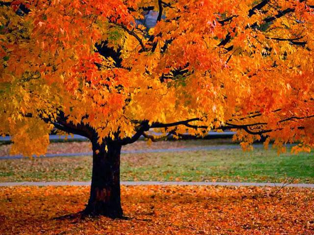 Fall, October, tree, leaves