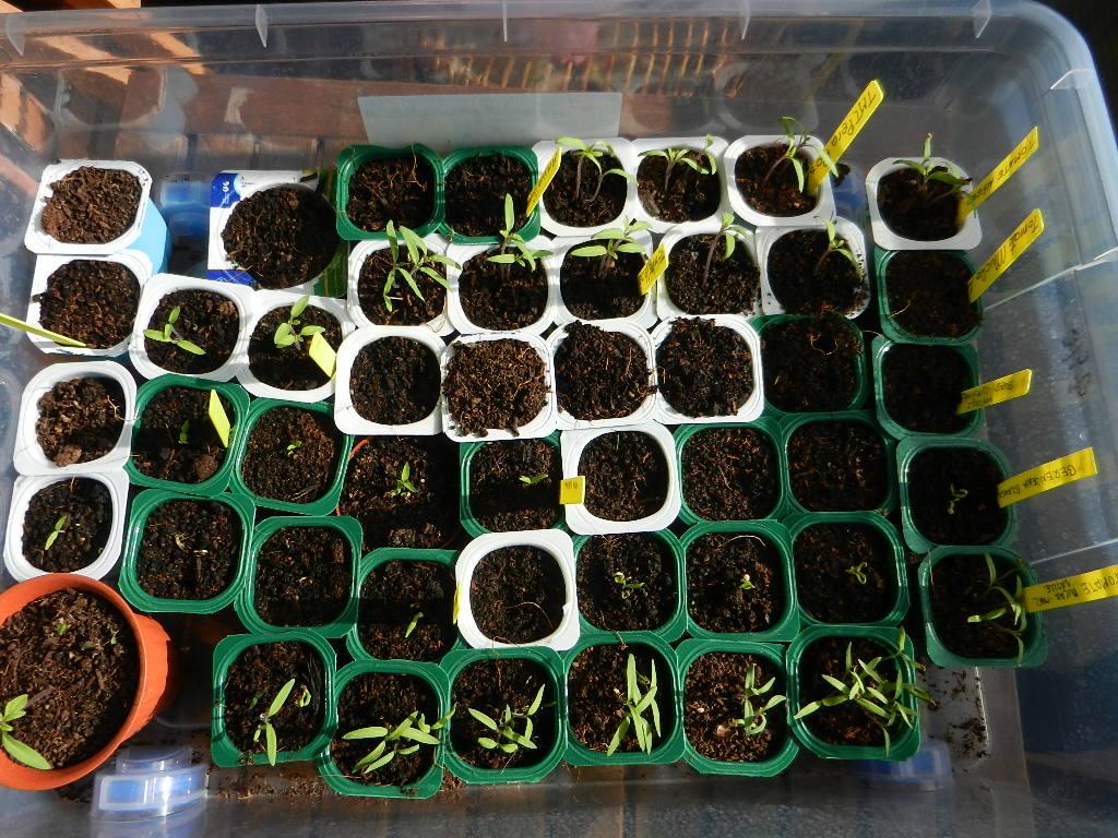 semilleros de hortalizas
