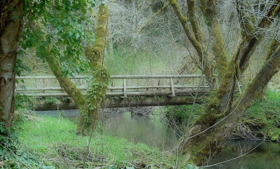 The banks of the Nehalem River area where the ghost of a horse thief and his dog are said to haunt near Veronia, Oregon
