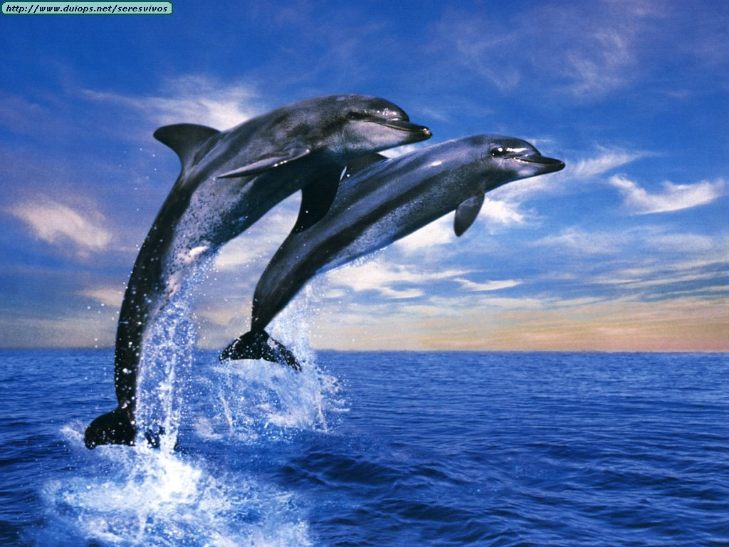 christianhdwallpaper dolphin wallpapers