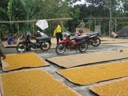 home-industri-makanan-makanan-ringan-marning-jagung