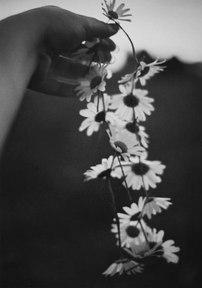 Zwykłe kwiaty, a ile w życiu potrafią namieszać