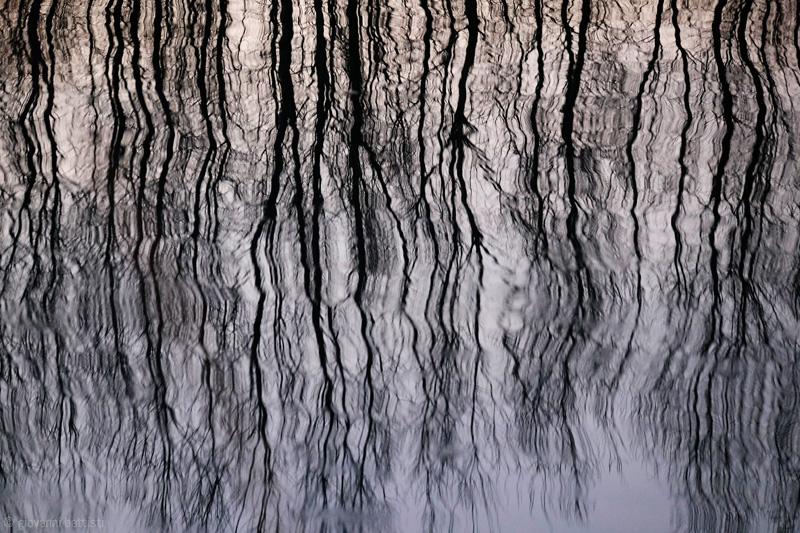 Riflessi di alberi nel fiume con il Fuji 55-200mm