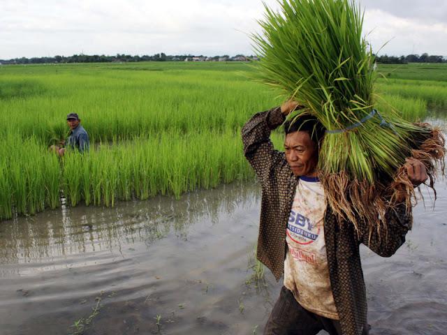 Pemerintah Tak Serius Tuntas Kemiskinan Petani