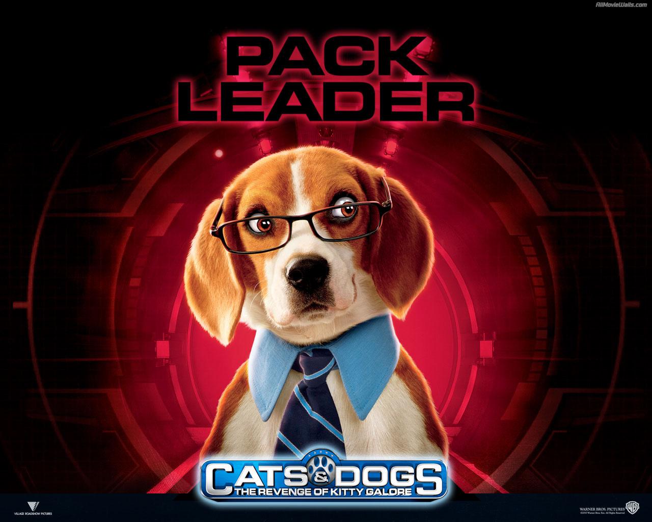 Koleksi Kartun Terbaik Cats And Dogs Pack Leader