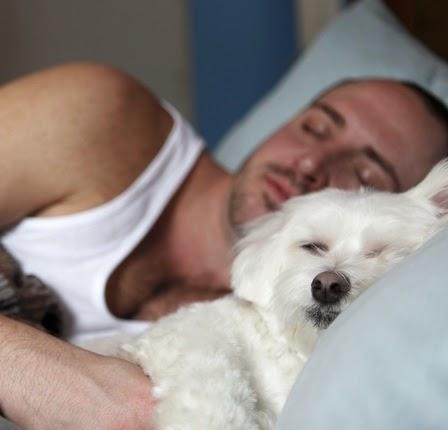 Cómo saber si mi perro me quiere: cuidados y nombres para tu mascota. Perro y dueño durmiendo