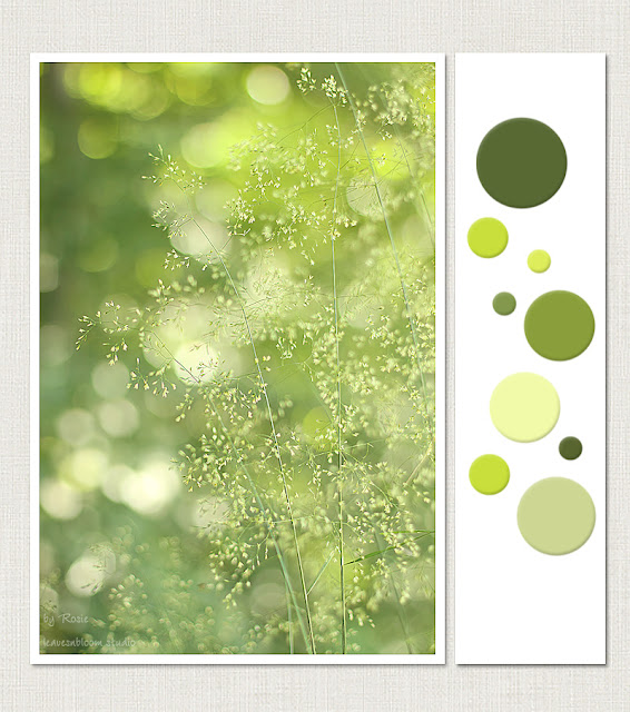 this is an image of green orbs of dreamy bokeh and grass flowers