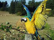 As Cores do meu Brasil7 de Setembro dia da Independência do Brasil (arara com as cores do brasil )