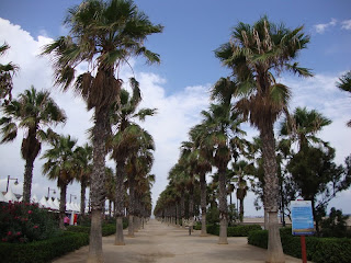 Palm trees in a street nearest El Cabanyal Beach photo - Valencia - Spain