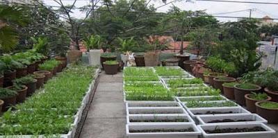 Vườn rau sân thượng