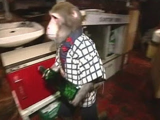 Smartest Animals On Earth rhesus macaque monkey