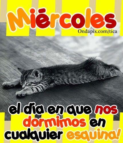 imagenes de miercoles con gatitos