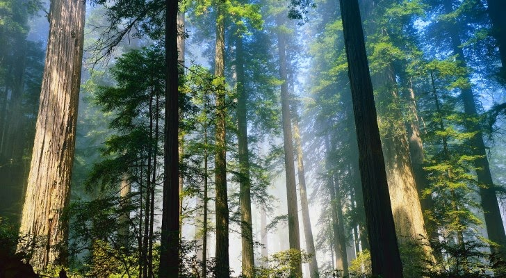 Living Near Trees Means Fewer Antidepressants
