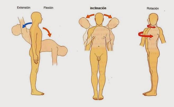 Anatomía de la columna vertebral: COLUMNA VERTEBRAL: MOVIMIENTOS