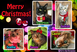 Merry Christmas Kitty Cat Chronicles and family!