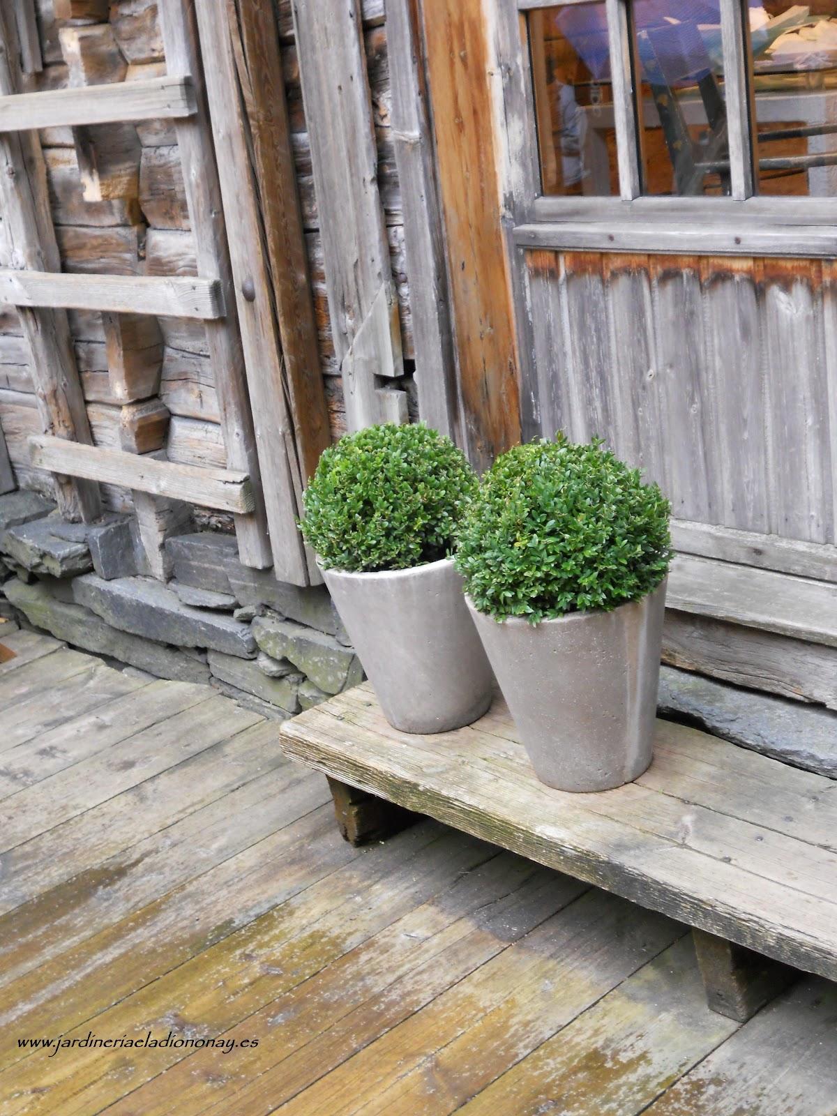 Jardineria eladio nonay el efecto cautivador de los - Tiestos de madera ...