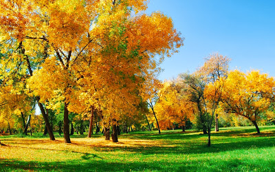 Autumn-HD-Wallpaper