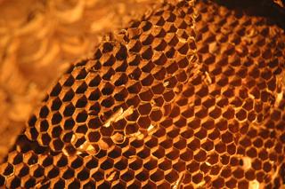 ハニカム構造の代表格である蜂の巣