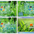 Download Glass Skin Pack for Windows 7