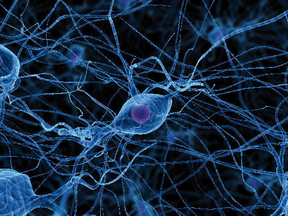 Nerve Cells Definition : What Is A Nerve Cell ? | Health And Beauty
