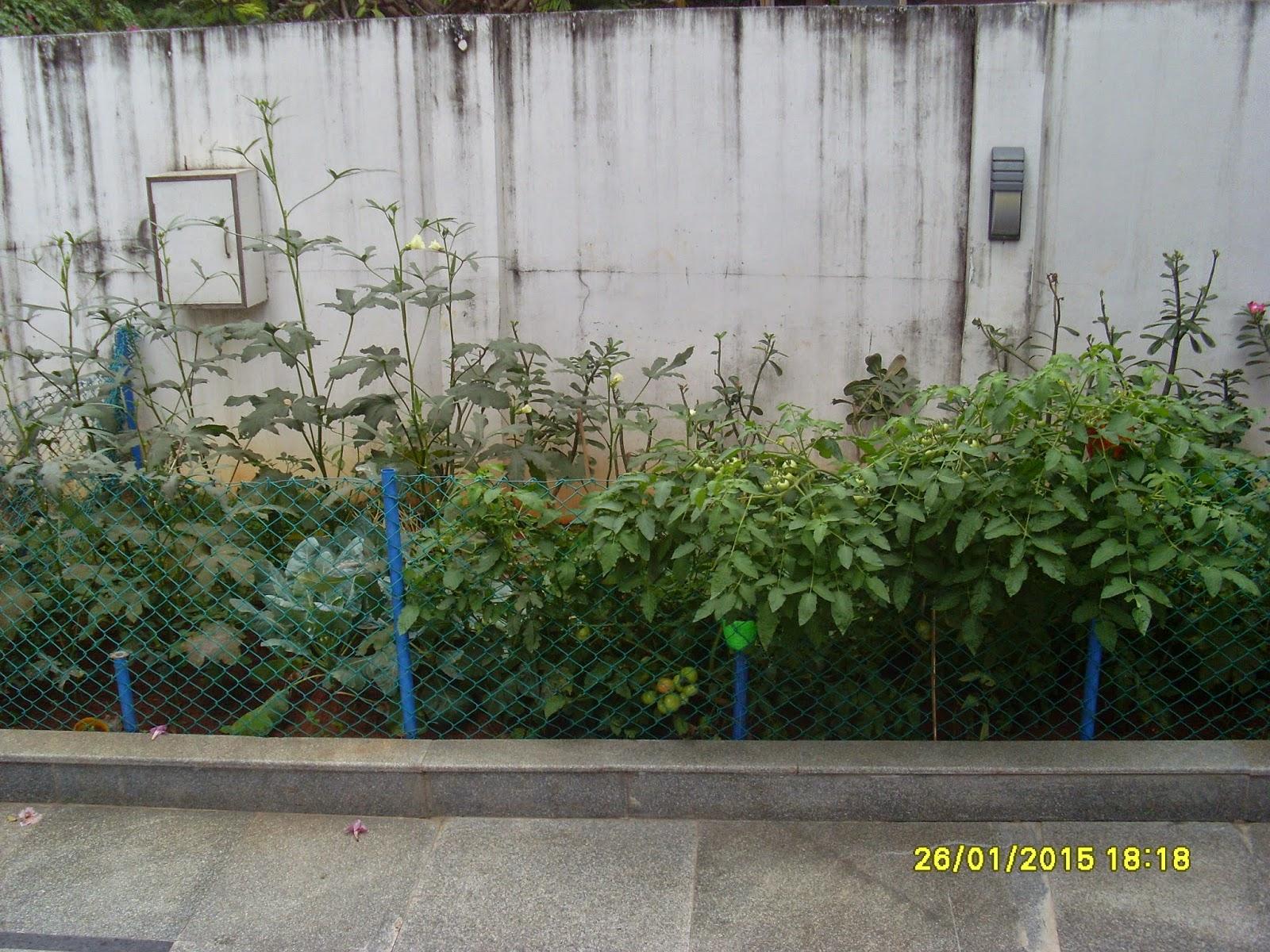 Roof Garden Pasumainayagan thagavalthalam