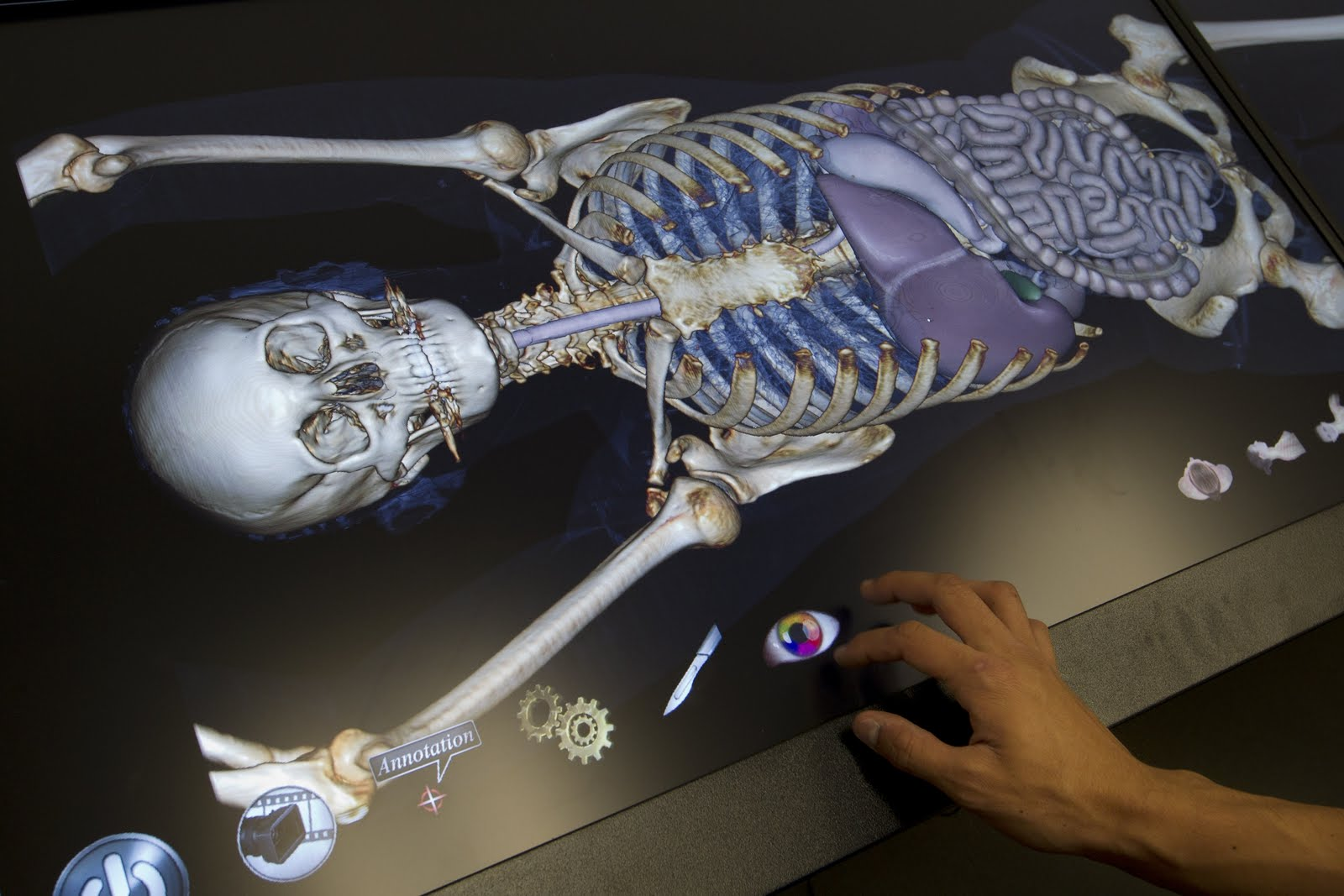 Online Human Anatomy And Physiology Help Digital Dissection Desk