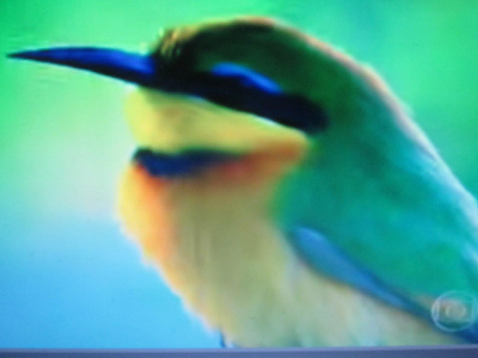 Até quando cantarão os pássaros?