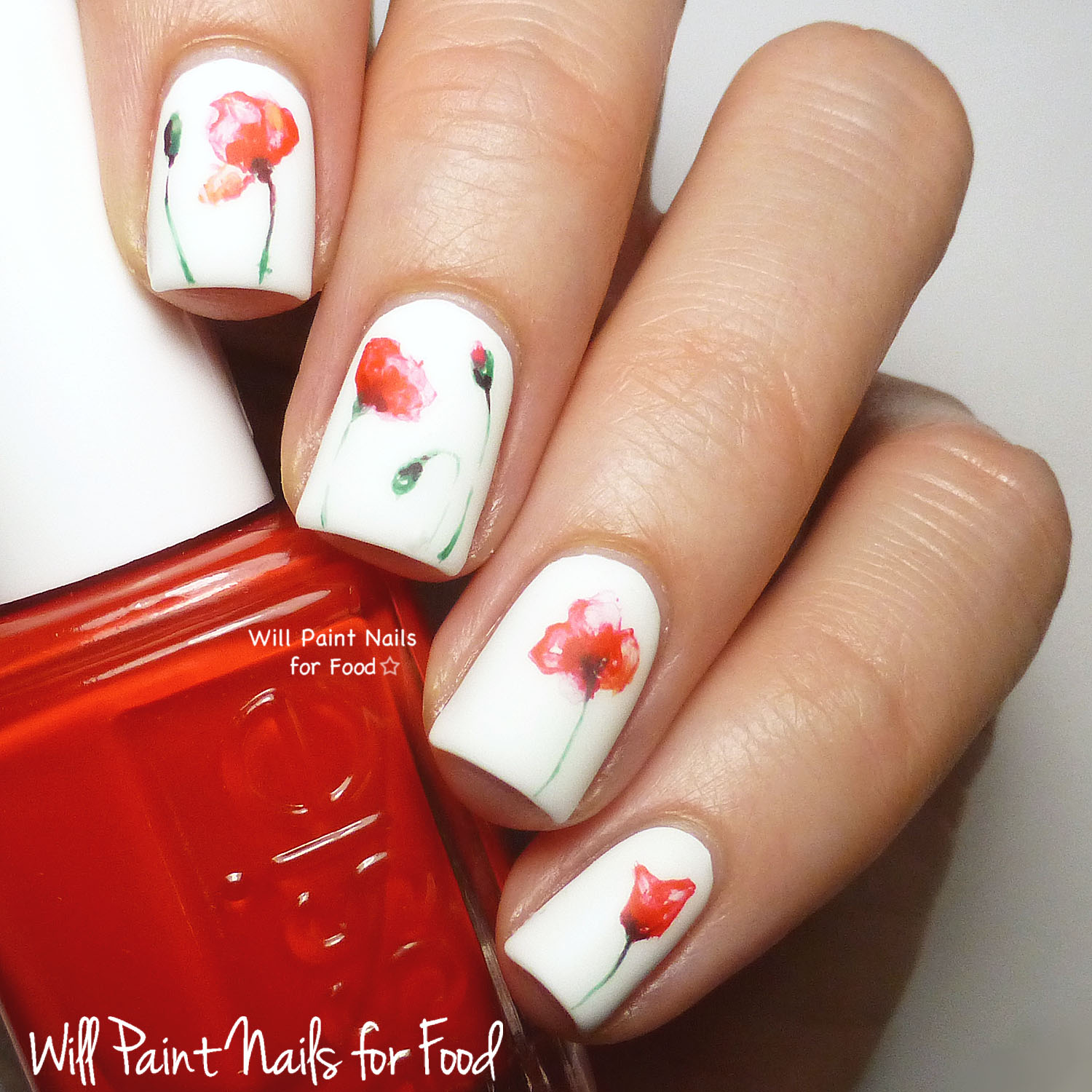 Minimalist watercolour poppies