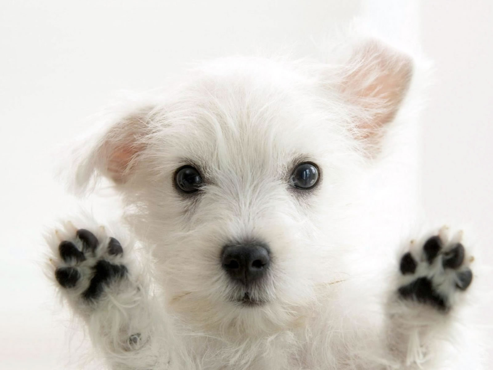 So Cute White Dog Photo Wallpaper | Dogs Wallpapers ...