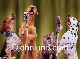 Funny Picture of Animals : Animal Sing8
