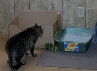 Cat Litter Smell Ammonia