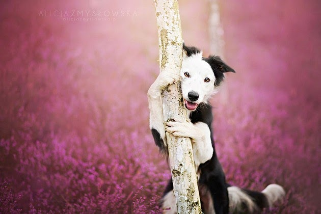 dog portrait photography,