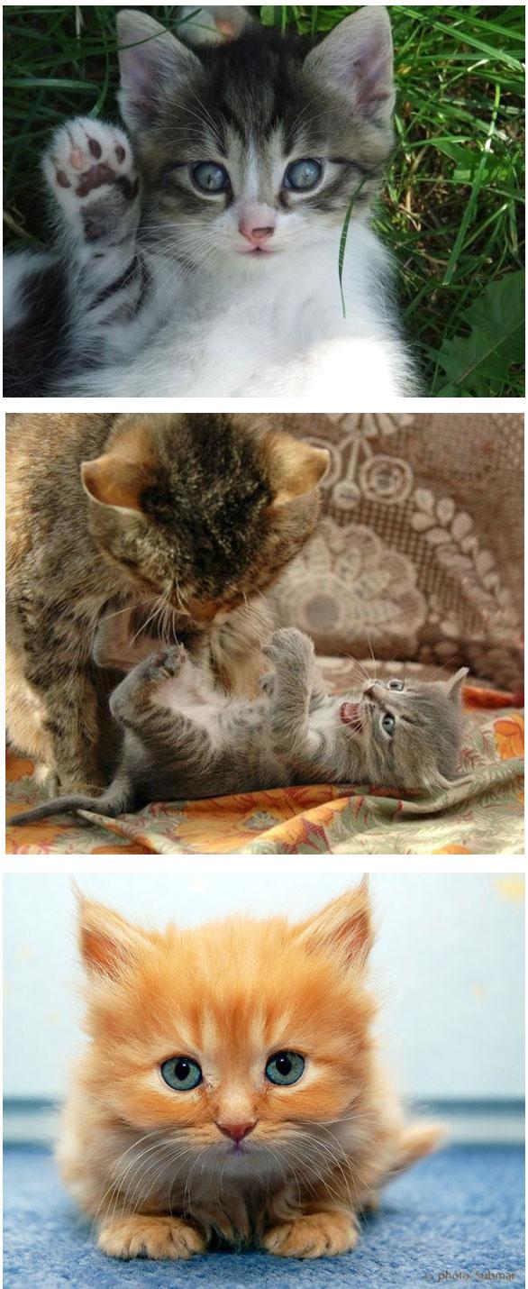 gambar kucing comel sangat  Kucingorg